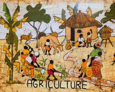 BkB Batik bold DSC_2856 Agriculture 300 pixels